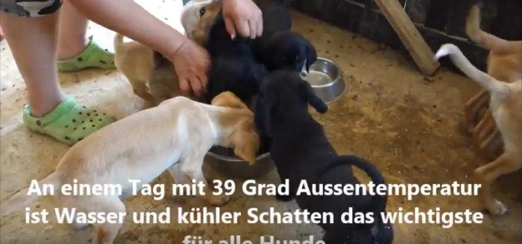 Spendenlieferung ins Tierheim Svilos Juli 2017